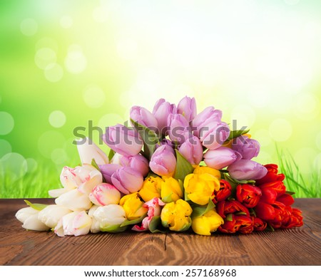 Bouquet of colored tulips on wooden planks - stock photo