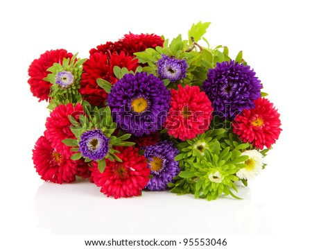 Bouquet of colorful Asters flowers over white background