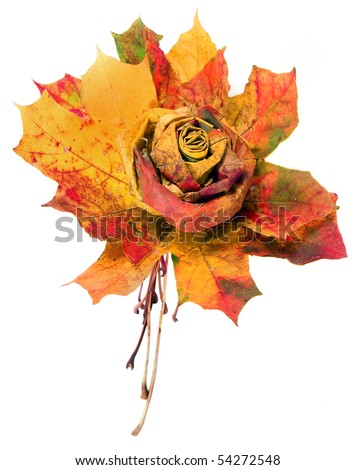 bouquet of colorful autumn leaves isolated - stock photo