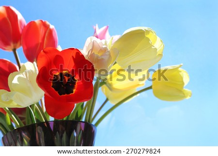 Bouquet of colorful bright tulips in a glass vase - stock photo