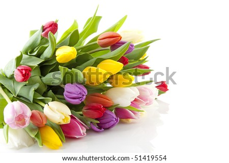 Bouquet of colorful Dutch tulips lie over white background
