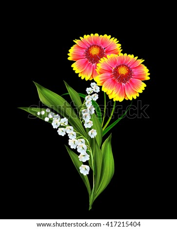 Bouquet of colorful flowers of Gaillardia. delicate flowers isolated on black background - stock photo