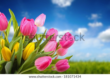 bouquet of colorful tulips against blue sky