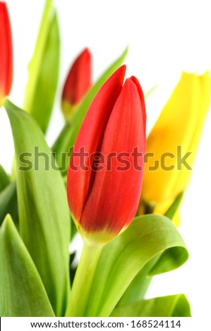 Bouquet of colorful tulips. On a white background. - stock photo