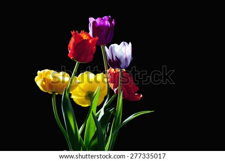 Bouquet of colorful tulips on black background