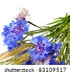 bouquet of cornflower centaurea and wheat ears isolated on a white - stock photo