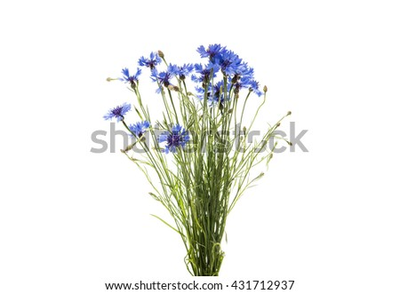 bouquet of cornflowers on a white background
