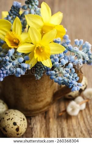 Bouquet of daffodils and blue muscari (Grape hyacinth)  - stock photo