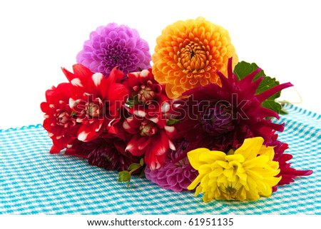 Bouquet of Dahlia flowers isolated on checkered cloth - stock photo