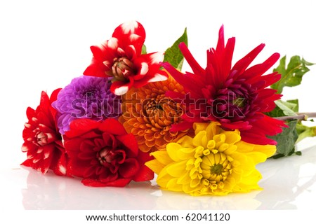 Bouquet of Dahlia flowers isolated on white background - stock photo