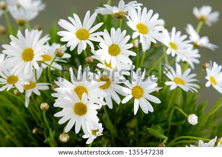 bouquet of daisies flowers