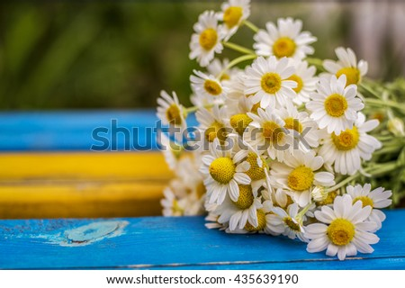 Bouquet of daisies on the bench - stock photo