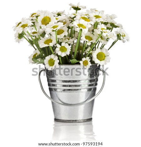 bouquet of daisy flowers in a bucket in white background - stock photo