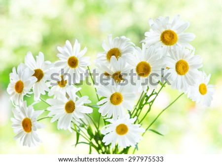 bouquet of daisy flowers on green background