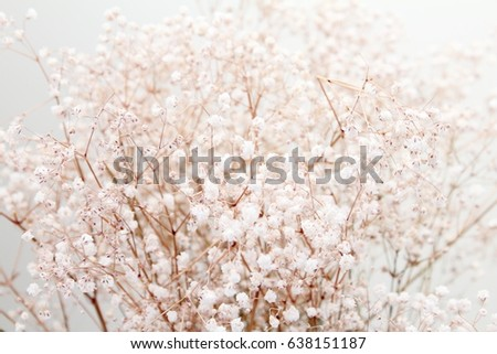 Bouquet of dried baby's breath