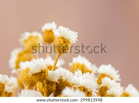 Bouquet of dried flowers. - stock photo