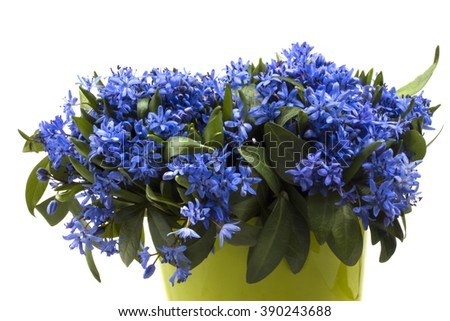 bouquet of early spring flowers First blue