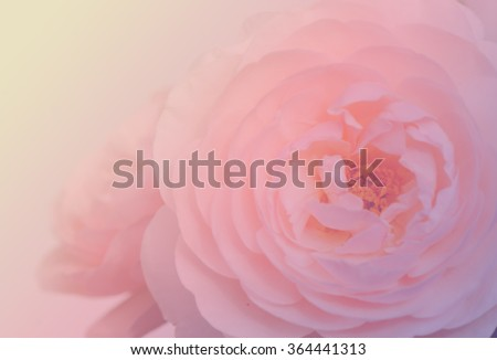 Bouquet of English roses soft blur background in vintage pastel tones.