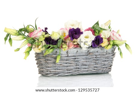 Bouquet of eustoma flowers in wicker basket isolated on white
