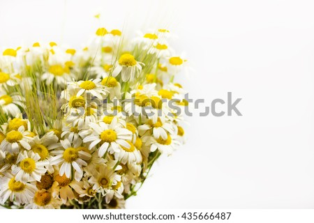Bouquet of field daisies on a white background