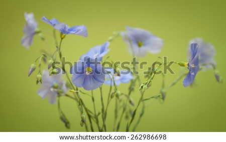 Bouquet of flax flowers on a green background - stock photo