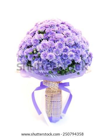 bouquet of flowers chrysanthemum color purple - stock photo