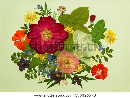 Bouquet of flowers on a light background. Pressed, dried rosehip flowers, malva, geranium, violet, dandelion, clover and lupine. Picture from dry flowers. Pressed floristry, oshibana. - stock photo
