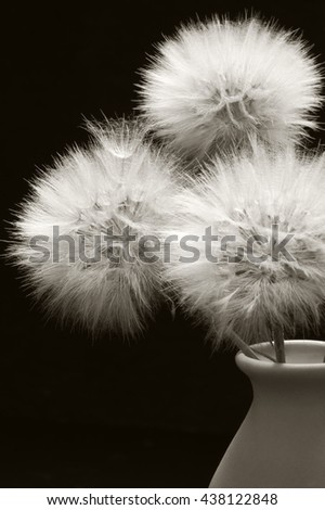 Bouquet of fluffy dandelions in vase close-up on dark background. Sepia toned image. Shallow DOF, focus on middle flower and seed. - stock photo