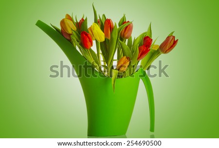 Bouquet of fresh living colorful tulips.  - stock photo