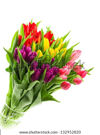bouquet of fresh multicolor tulip flowers isolated on white background - stock photo
