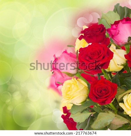 bouquet of fresh multicolored  roses close up on green bokeh background - stock photo