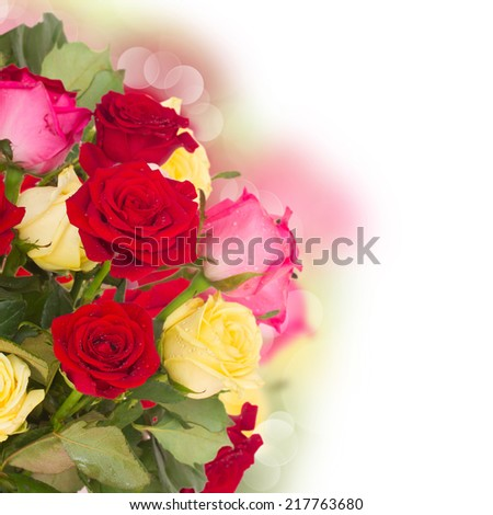 bouquet of fresh multicolored  roses close up  on white background - stock photo