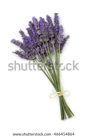 Bouquet of fresh purple lavender flowers on white background