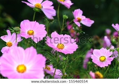 Bouquet of fresh red flowers in garden.  - stock photo