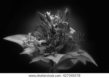 Bouquet of fresh spring purple irises with field flowers. Iris card. Isolated on black background with grey spot. Studio capture. Black and white - stock photo