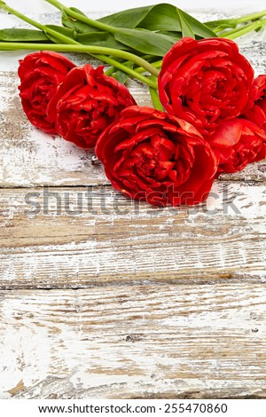 bouquet of fresh spring tulip flowers - stock photo