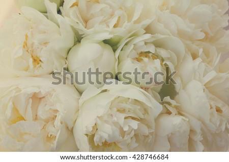 Bouquet of fresh white peony flowers bakcground, retro toned - stock photo