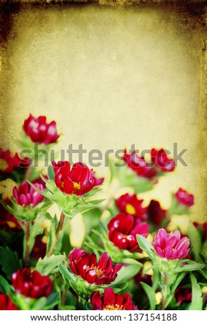 Bouquet of fresh wild red flowers - stock photo