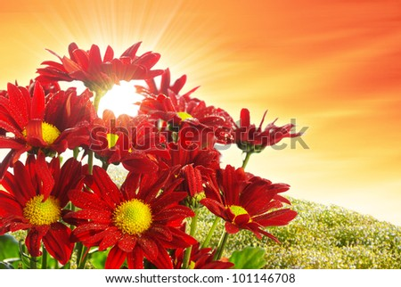 Bouquet of fresh wild red flowers with water drops - stock photo