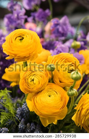 Bouquet of fresh yellow Ranunculus flowers - stock photo