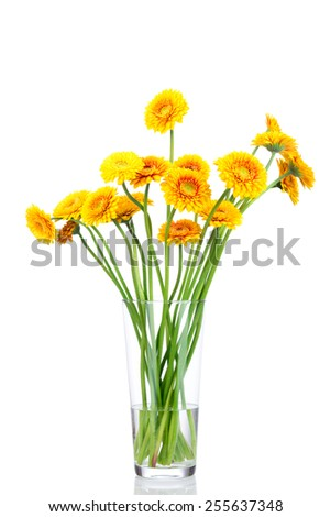 Bouquet of gerber flowers in the vase on white background - stock photo