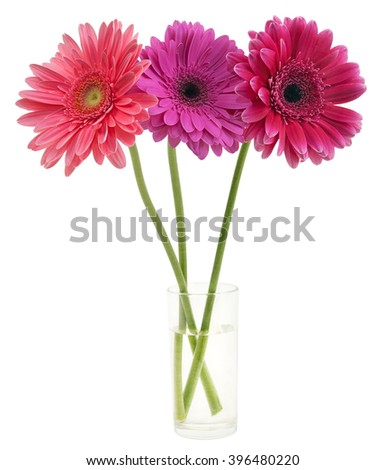 bouquet of gerber in a glass - stock photo