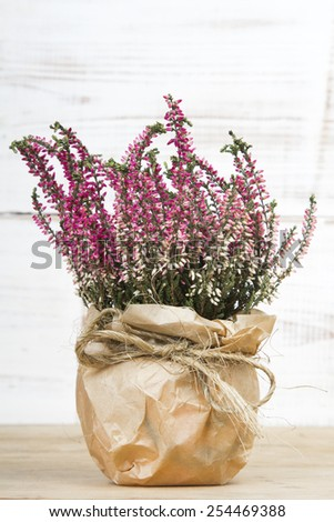 bouquet of heather on white wooden background - stock photo
