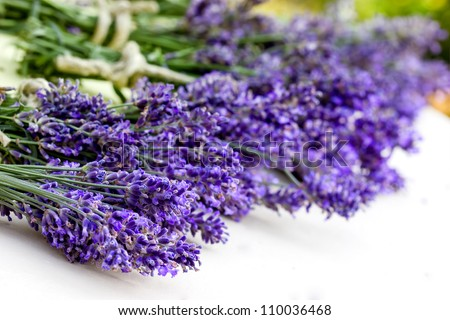Bouquet of lavender - stock photo