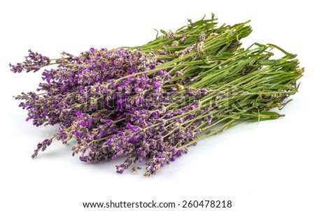 Bouquet of lavender in close-up isolated on white background