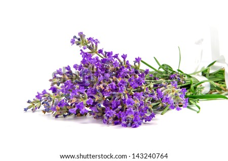bouquet of lavender on white background
