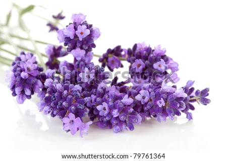 Bouquet of lavender over white background