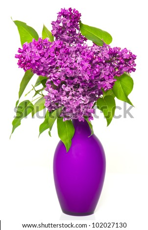 bouquet of lilac flowers in vase on white background - stock photo