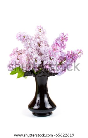 Bouquet of lilac in a black vase on a white background