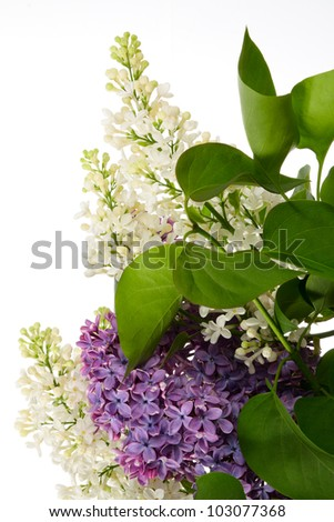 Bouquet of lilac isolated on white - stock photo